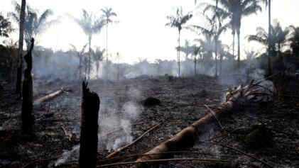 Amazonia: hay que parar la saña predatoria de Bolsonaro y los capitalistas