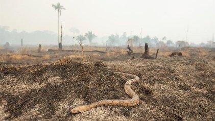 Amazonas en llamas: quiénes son los responsables