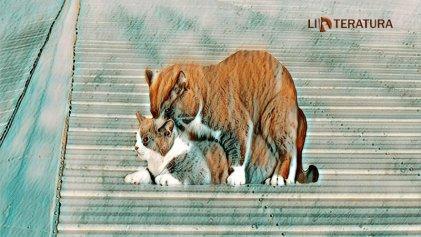 """Cuento: """"Gatos en el tinglado de zinc"""""""