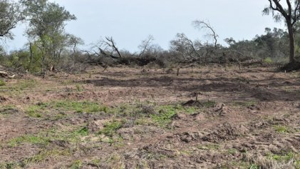 En Argentina el 50 % de la deforestación sigue siendo ilegal
