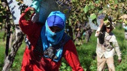 Equipos de ropa de trabajo para trabajadores de viña: comenzó a debatirse en la Legislatura de Mendoza