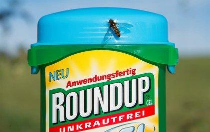 Luego del fallo contra Monsanto por causar cáncer, la Comisión Europea ratifica el uso del glifosato