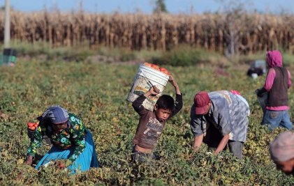 Corrientes: peones rurales recibirán indemnización por explotación laboral