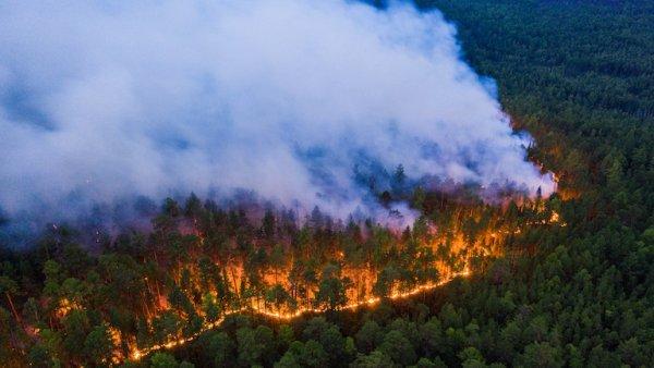 Siberia en llamas: se quemaron más de veinte millones de hectáreas