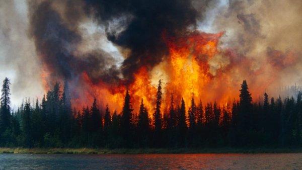 """""""Lo que pasa en los polos no se queda en los polos"""": incendios en el Ártico desnudan la crisis climática"""