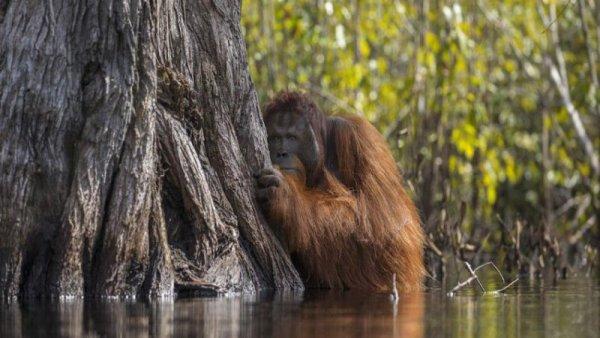 """""""70% de los brotes epidémicos se originaron con la pérdida de ecosistemas"""": OMS"""